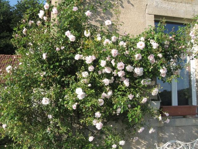 mon extérieur fleuris de mon chez moi lol Img_0209