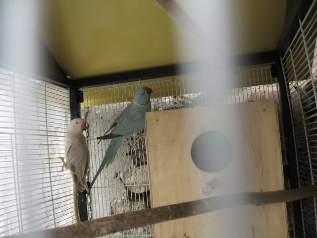 mes oiseaux exotique  - Page 2 Img_0210