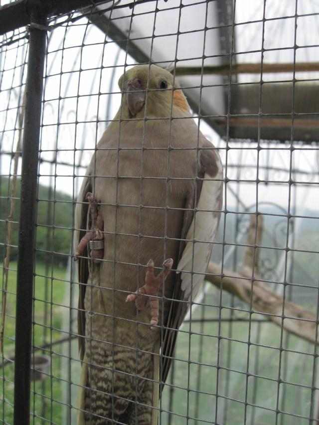 mes oiseaux exotique  Img_0212