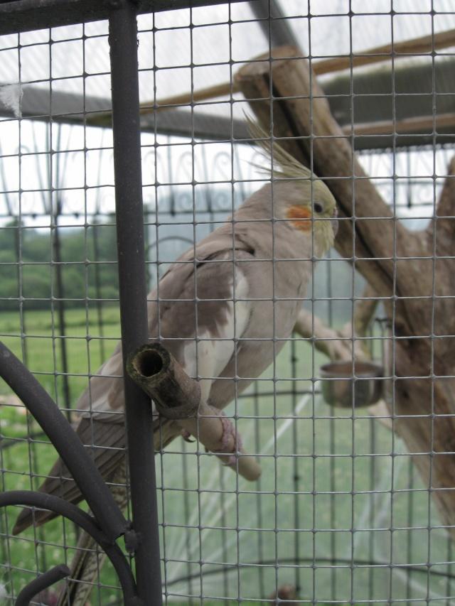 mes oiseaux exotique  Img_0213