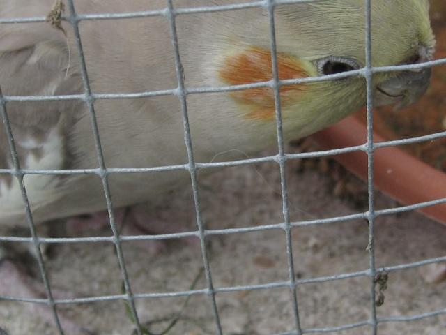 mes oiseaux exotique  Img_0214