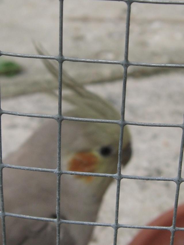 mes oiseaux exotique  Img_0215