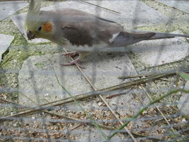 mes oiseaux exotique  Img_0216