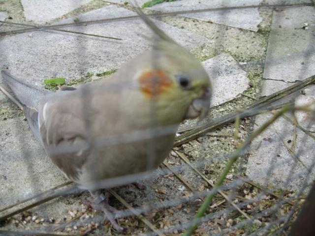 mes oiseaux exotique  Img_0217