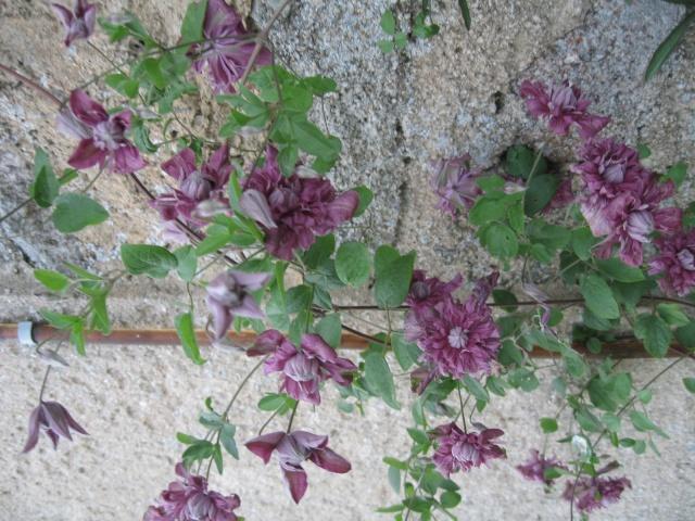 mon extérieur fleuris de mon chez moi lol - Page 2 Img_0229