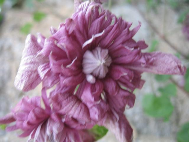 mon extérieur fleuris de mon chez moi lol Img_0230