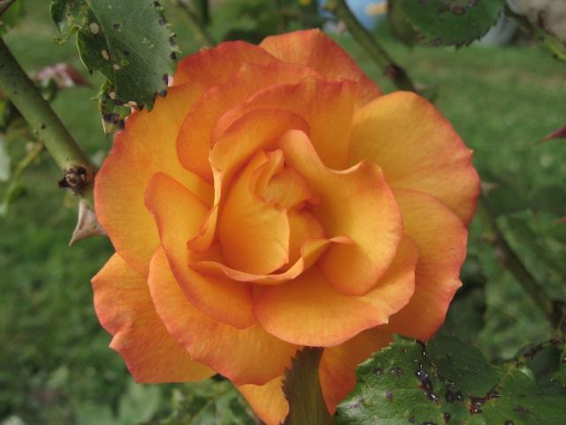 mon extérieur fleuris de mon chez moi lol Img_0233