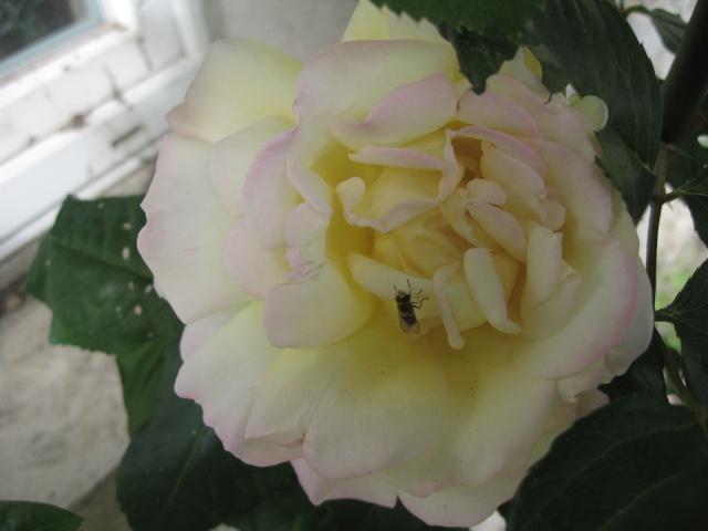 mon extérieur fleuris de mon chez moi lol Img_0236
