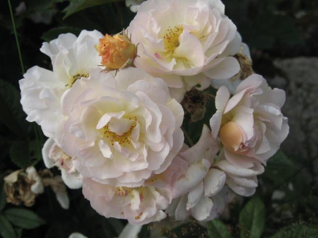 mon extérieur fleuris de mon chez moi lol Img_0237