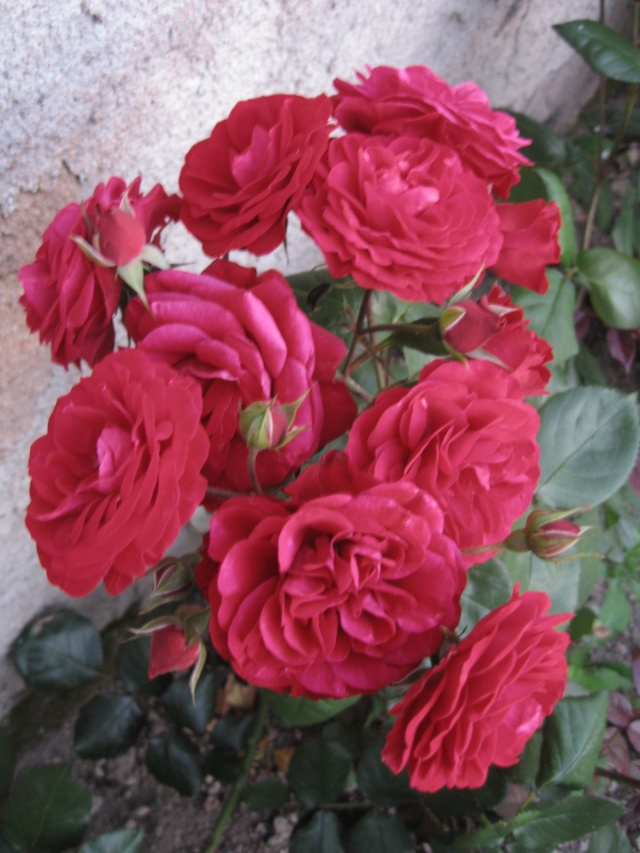 mon extérieur fleuris de mon chez moi lol Img_0239