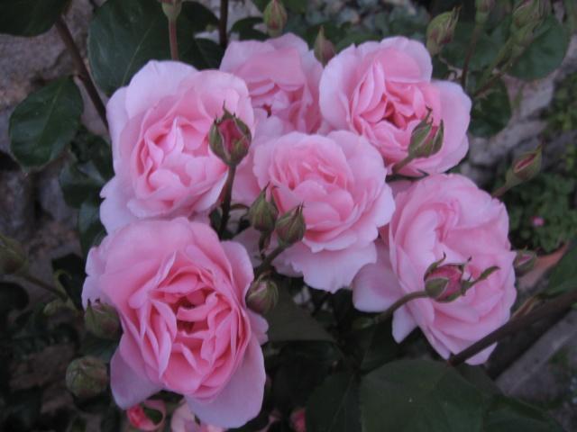 mon extérieur fleuris de mon chez moi lol Img_0240