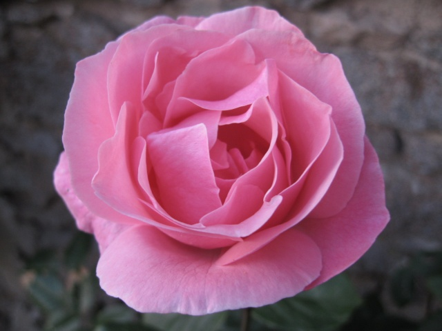 mon extérieur fleuris de mon chez moi lol Img_0241