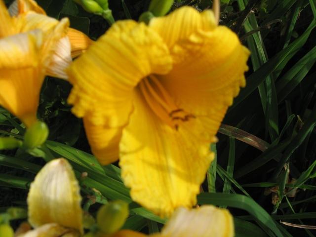 mon extérieur fleuris de mon chez moi lol - Page 2 Img_0254