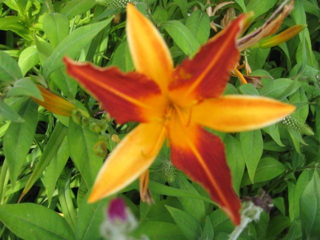 mon extérieur fleuris de mon chez moi lol - Page 2 Img_0257
