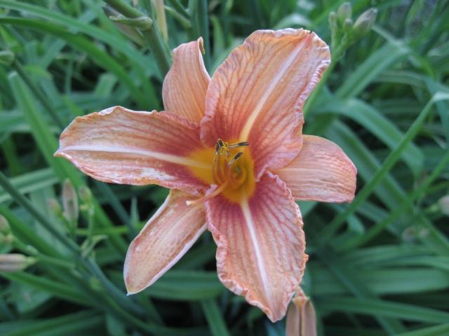 mon extérieur fleuris de mon chez moi lol - Page 2 Img_0258