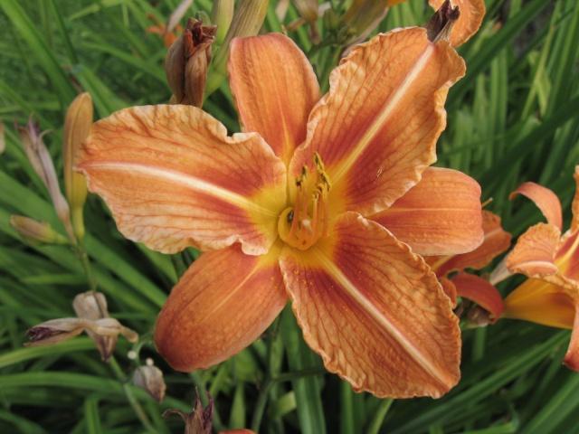 mon extérieur fleuris de mon chez moi lol - Page 2 Img_0259