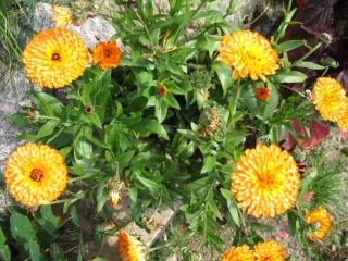 fleurs de marc et mario - Page 9 Img_0311