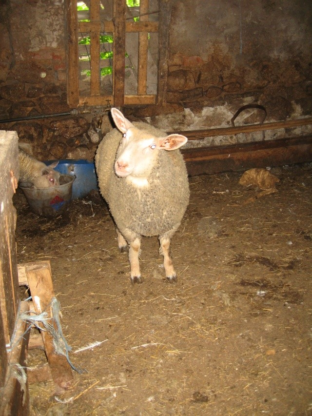 les petites oies née hier et mes autres animaux - Page 2 Img_0331