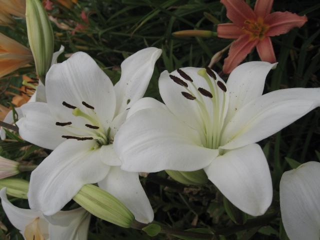 mon extérieur fleuris de mon chez moi lol - Page 2 Img_0332