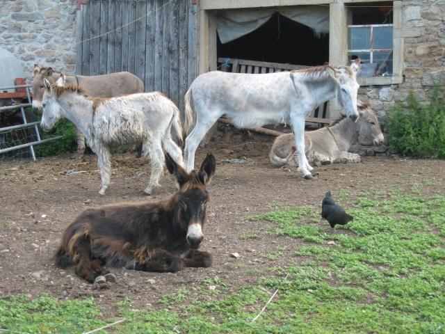 les petites oies née hier et mes autres animaux - Page 3 Img_0336