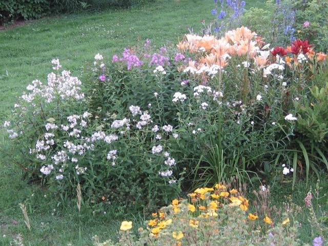 mon extérieur fleuris de mon chez moi lol - Page 2 Img_0339