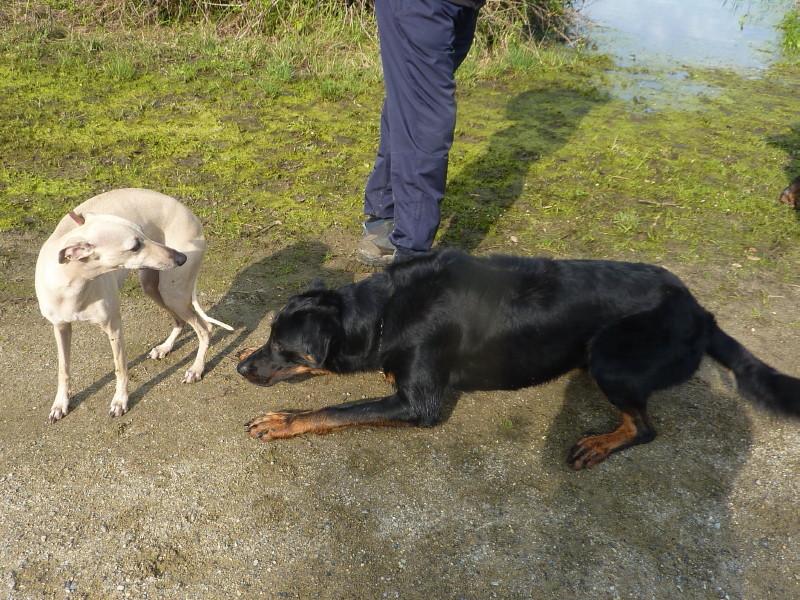 Comportement des chiens entre eux Img_0091
