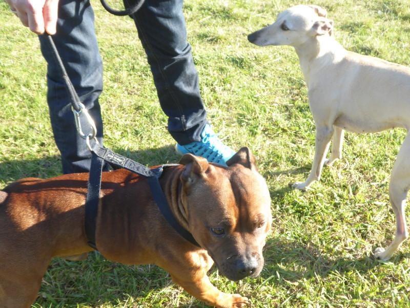 Comportement des chiens entre eux Img_0093