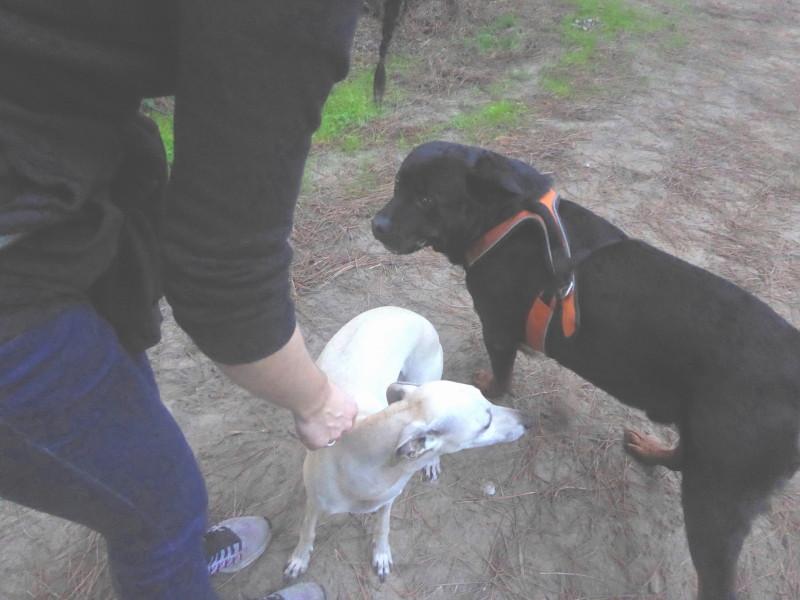 Comportement des chiens entre eux Img_0094