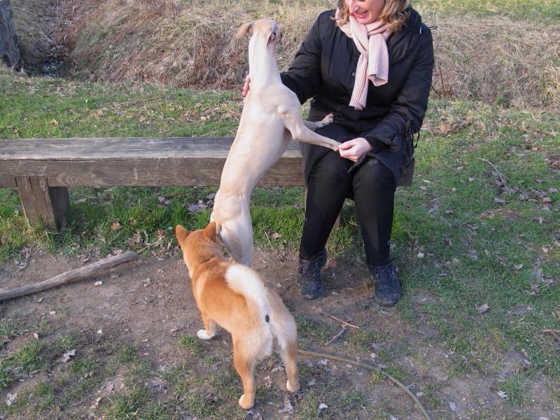 Les Shiba_ Inu sont les chiens les plus beaux :p Img_0208
