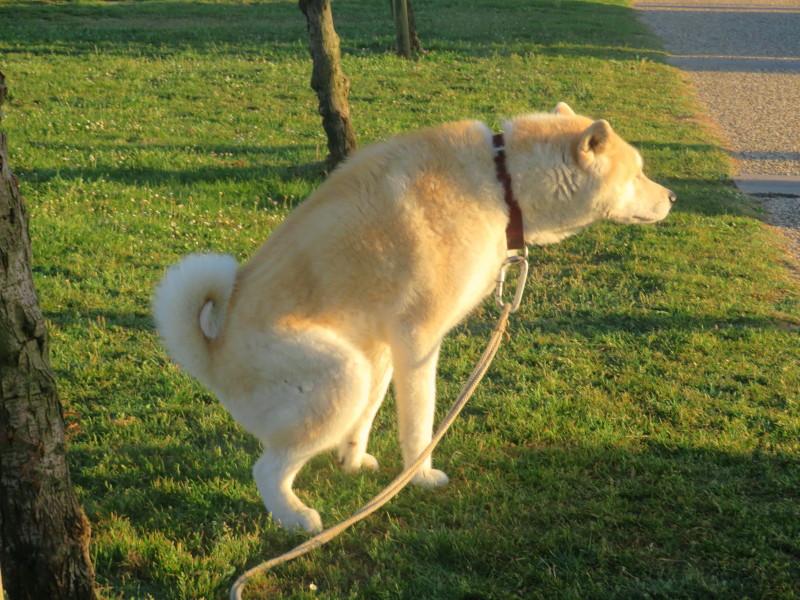 les excréments de chiens Img_1315