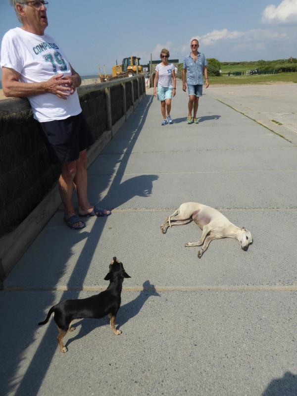 Petit lexique pour mieux comprendre le comportement canin (humour) P1000410