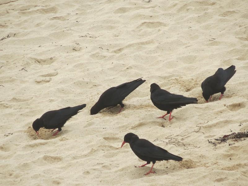 plage Penhir  un jour de pluie d'aout  Img_3317