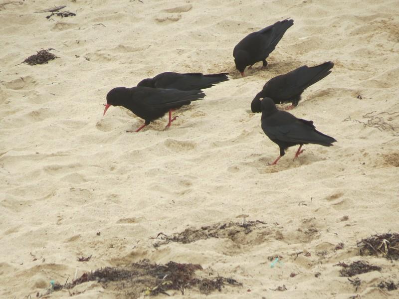 plage Penhir  un jour de pluie d'aout  Img_3322