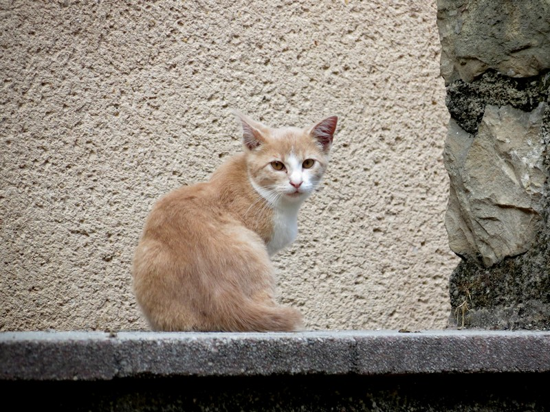 chat d'aveyron Img_3910