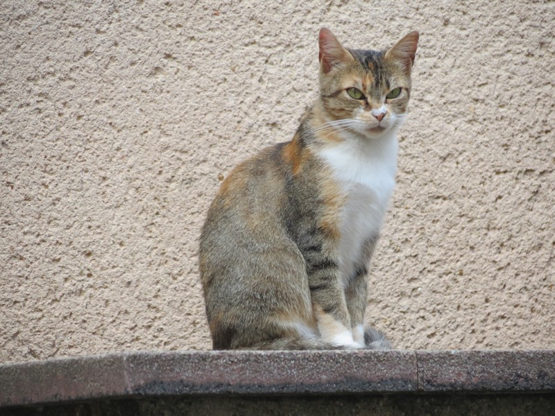 chat d'aveyron Img_3911