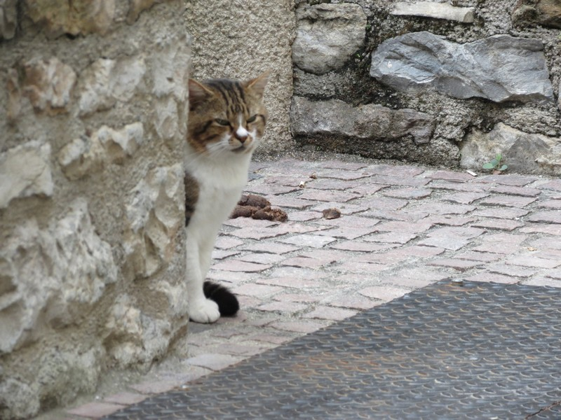 chat d'aveyron Img_3912