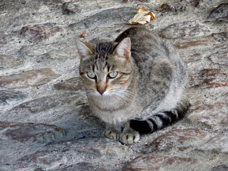 chat d'aveyron Img_3914