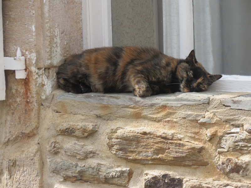 chat d'aveyron Img_4011