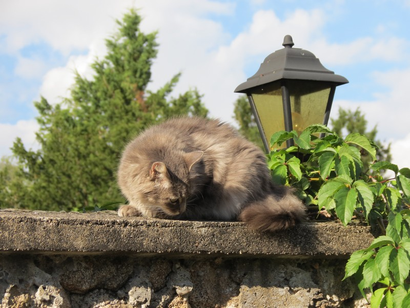 chat d'aveyron Img_4112