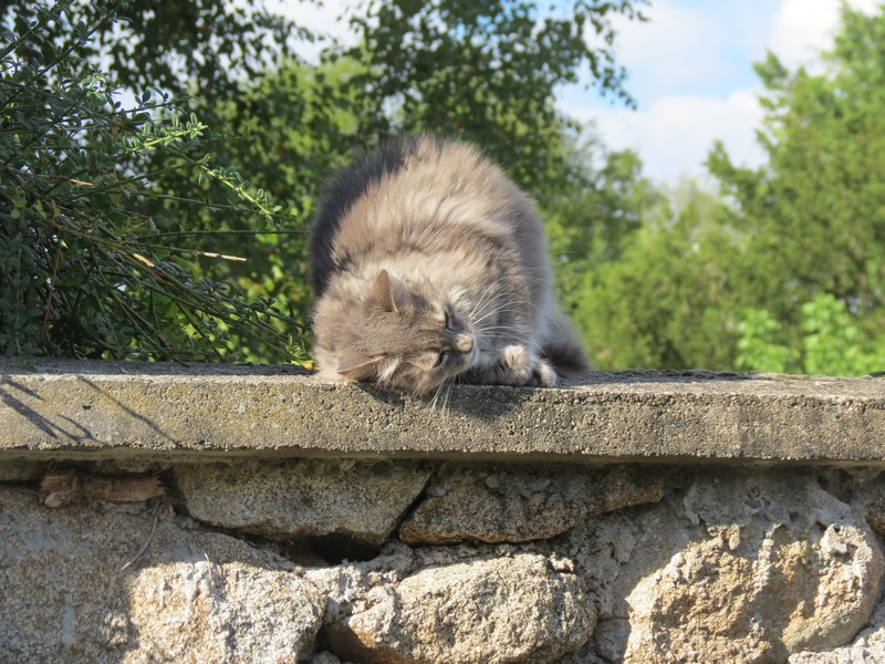 chat d'aveyron Img_4113