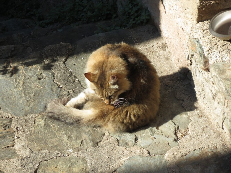 chat d'aveyron Img_4210