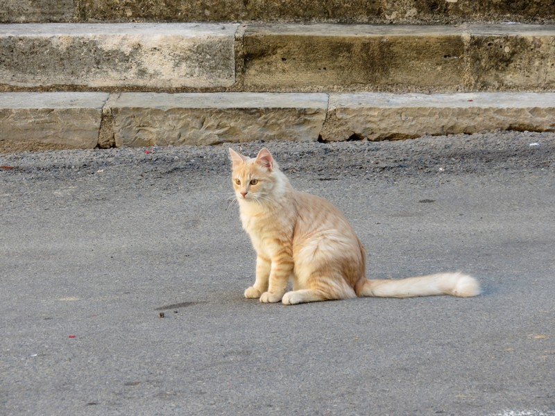chat d'aveyron Img_4411