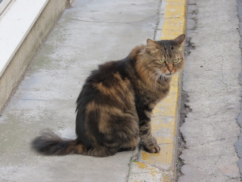 chat d'aveyron Img_5310