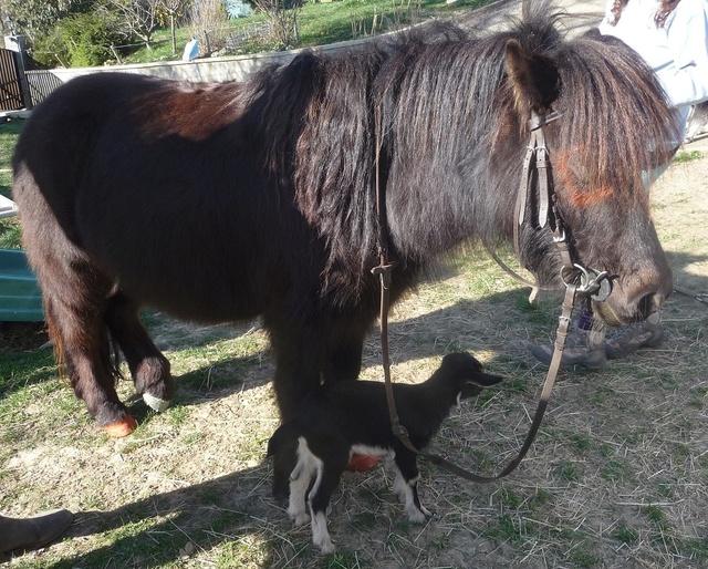 """Concours photos """"les compagnons de vos chevaux"""" gagnant Joël P1220010"""