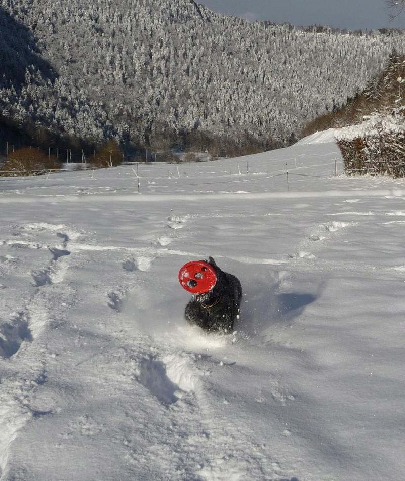Nouveau CONCOURS PHOTOS: Un Schnauzer en hiver - Page 2 P1010716