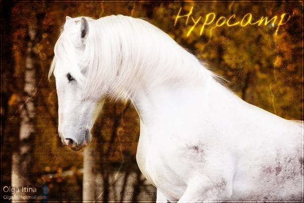 Hypocamp' 68309110
