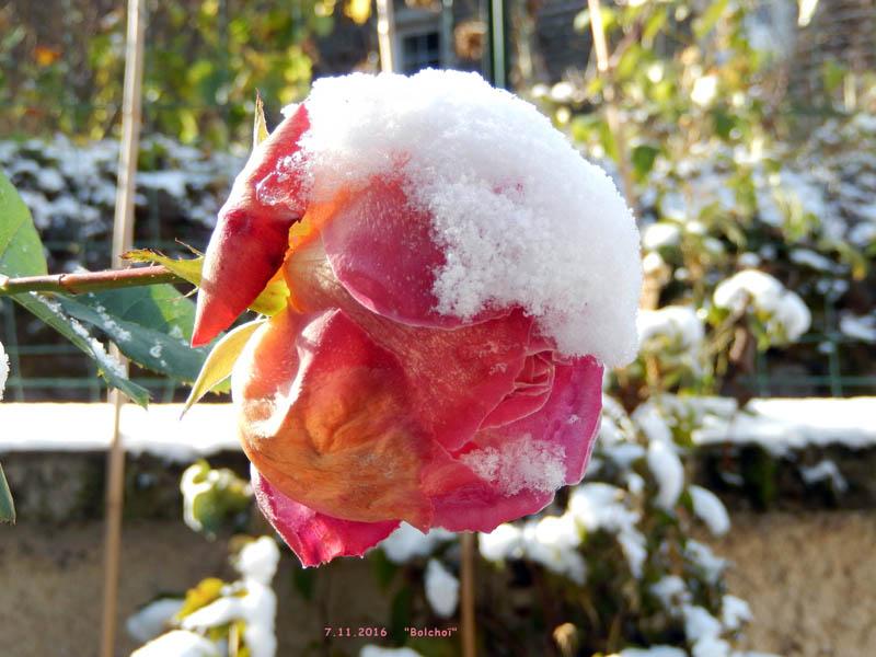 Un bouquet d'arrière-saison ........... 2016-711