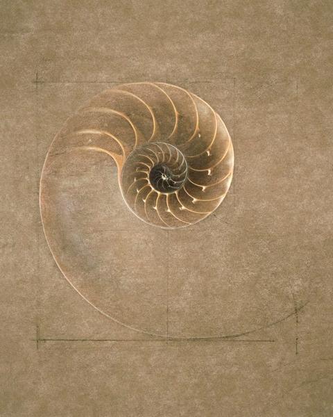 La spirale, mouvement de vie. - Page 9 Spiral13