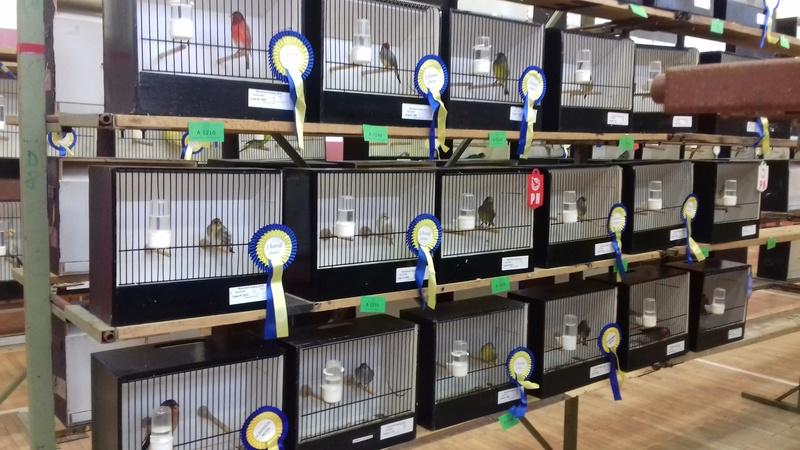 expo et bourse du bouvreuil Hutois  20161158