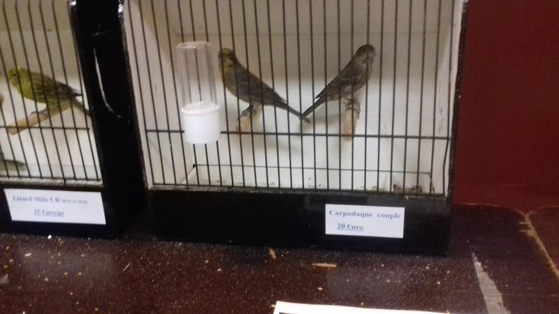 bourses d'oiseaux a flemalle - Page 2 20161172